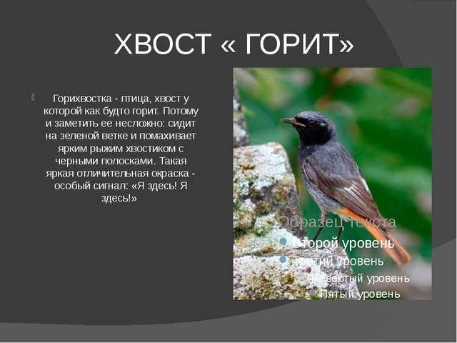 ХВОСТ « ГОРИТ» Горихвостка - птица, хвост у которой как будто горит. Потому...