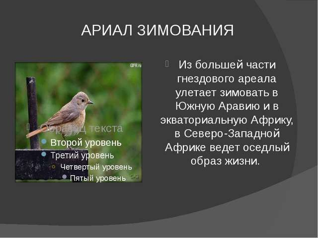 АРИАЛ ЗИМОВАНИЯ Из большей части гнездового ареала улетает зимовать в Южную А...
