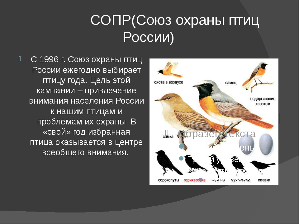 СОПР(Союз охраны птиц России) С 1996 г. Союз охраны птиц России ежегодно выб...