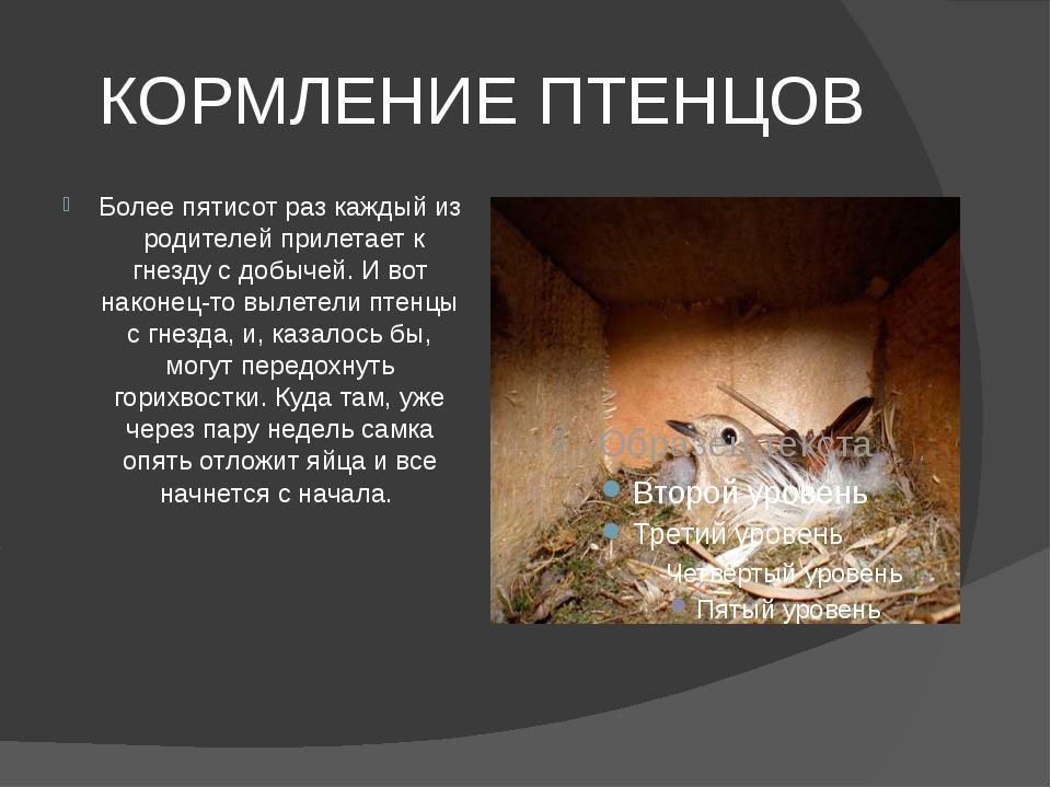 КОРМЛЕНИЕ ПТЕНЦОВ Более пятисот раз каждый из родителей прилетает к гнезду с...