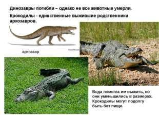 архозавр Динозавры погибли – однако не все животные умерли. Крокодилы - единс