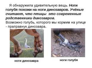 Я обнаружила удивительную вещь. Ноги голубя похожи на ноги динозавров. Учёны