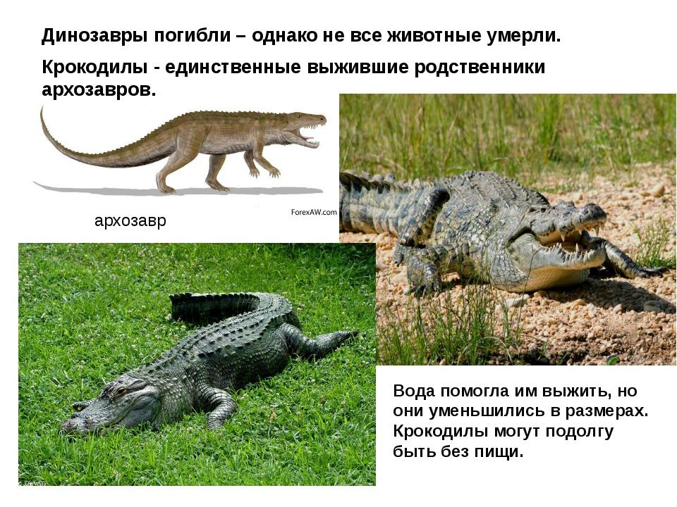 архозавр Динозавры погибли – однако не все животные умерли. Крокодилы - единс...