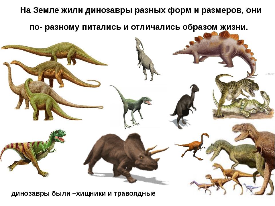 динозавры были –хищники и травоядные На Земле жили динозавры разных форм и ра...
