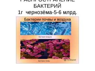 РАСПРОСТРАНЕНИЕ БАКТЕРИЙ 1г чернозёма-5-6 млрд. 1г песка-1млрд.