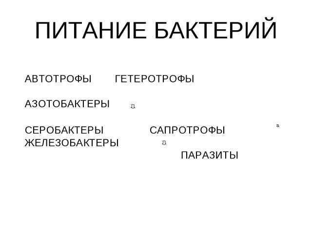 ПИТАНИЕ БАКТЕРИЙ АВТОТРОФЫ ГЕТЕРОТРОФЫ АЗОТОБАКТЕРЫ СЕРОБАКТЕРЫСА...
