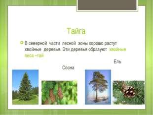 Тайга В северной части лесной зоны хорошо растут хвойные деревья. Эти деревья