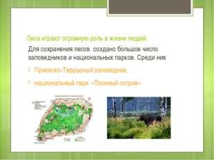 Леса играют огромную роль в жизни людей. Для сохранения лесов создано большое