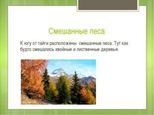 Смешанные леса К югу от тайги расположены смешанные леса. Тут как будто смеша