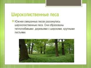 Широколиственные леса Южнее смешанных лесов раскинулись широколиственные леса