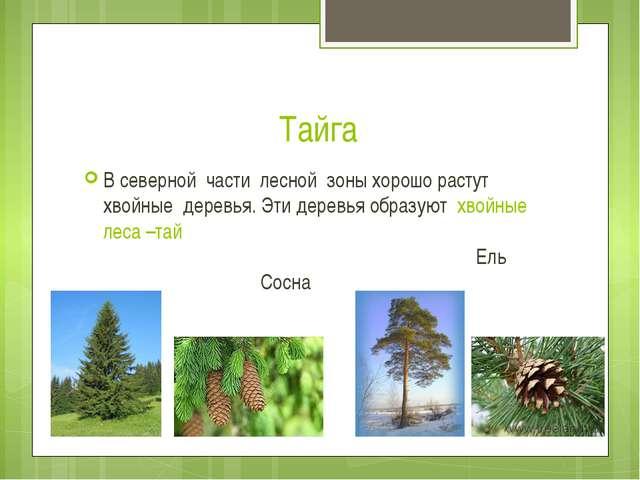 Тайга В северной части лесной зоны хорошо растут хвойные деревья. Эти деревья...