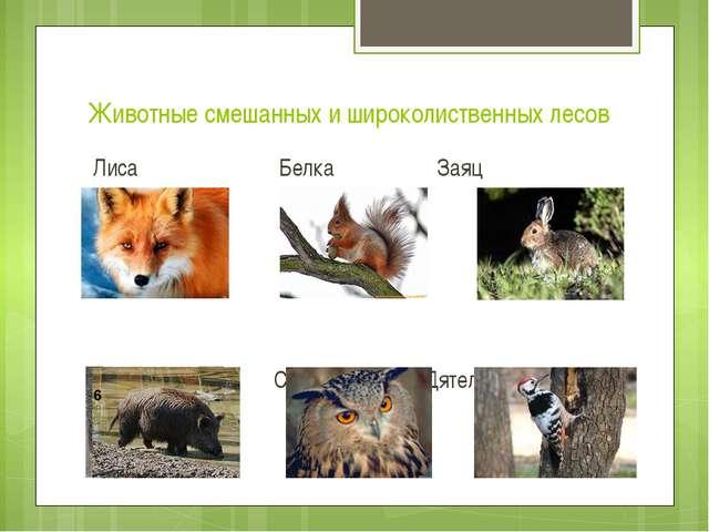 Животные смешанных и широколиственных лесов Лиса Белка Заяц Кабан Сова Дятел