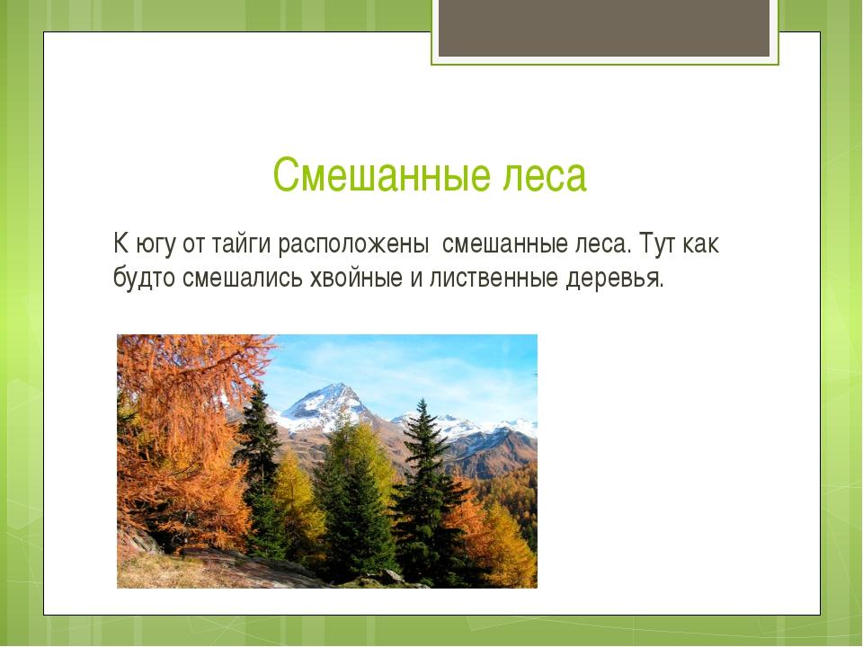 Смешанные леса К югу от тайги расположены смешанные леса. Тут как будто смеша...