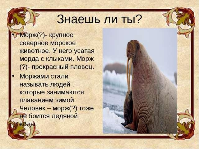 Знаешь ли ты? Морж(?)- крупное северное морское животное. У него усатая морда...