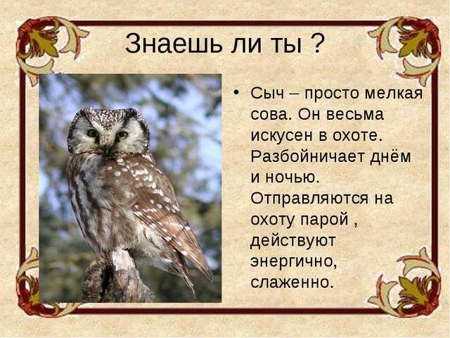 Знаешь ли ты ? Сыч – просто мелкая сова. Он весьма искусен в охоте. Разбойнич...