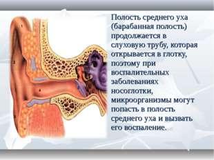 Полость среднего уха (барабанная полость) продолжается в слуховую трубу, кото
