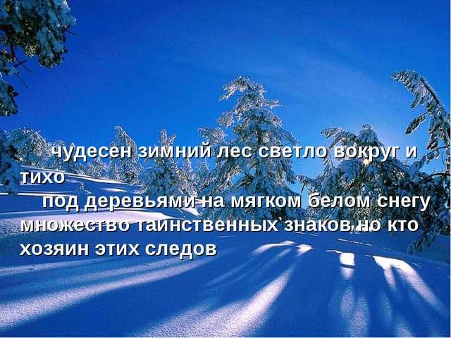чудесен зимний лес светло вокруг и тихо под деревьями на мягком белом снегу...