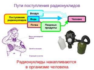 Радионуклиды накапливаются в организме человека Пути поступления радионуклидов