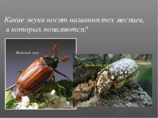 Какие жуки носят названия тех месяцев, в которых появляются? Майский жук Июль
