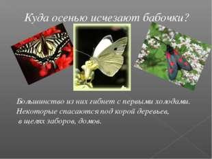Куда осенью исчезают бабочки? Большинство из них гибнет с первыми холодами. Н