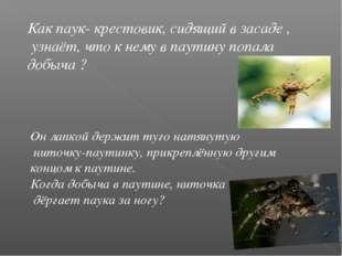 Как паук- крестовик, сидящий в засаде , узнаёт, что к нему в паутину попала д
