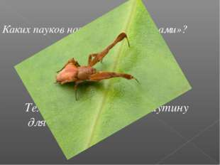Каких пауков называют «бродягами»? Тех, которые не ткут паутину для ловли доб