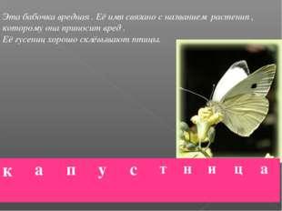 Эта бабочка вредная . Её имя связано с названием растения , которому она прин