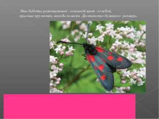 Эта бабочка разноцветная : основной цвет –голубой, красные кружочки, иногда п