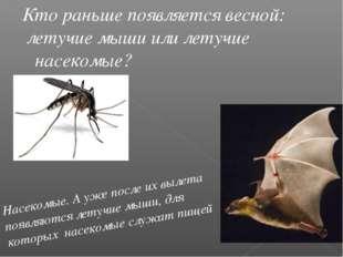Кто раньше появляется весной: летучие мыши или летучие насекомые? Насекомые.