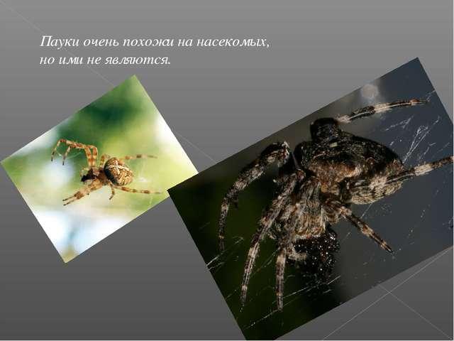 Пауки очень похожи на насекомых, но ими не являются.
