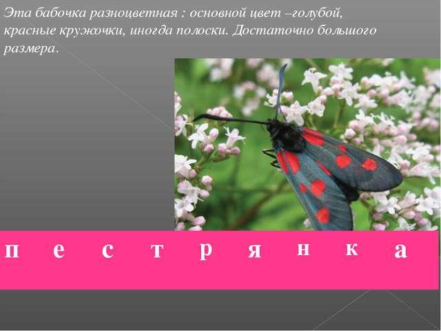 Эта бабочка разноцветная : основной цвет –голубой, красные кружочки, иногда п...