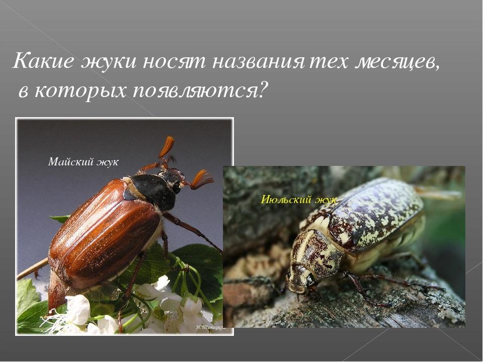 Какие жуки носят названия тех месяцев, в которых появляются? Майский жук Июль...