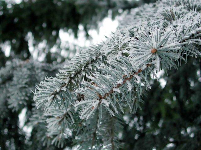 Тихое наступление зимы