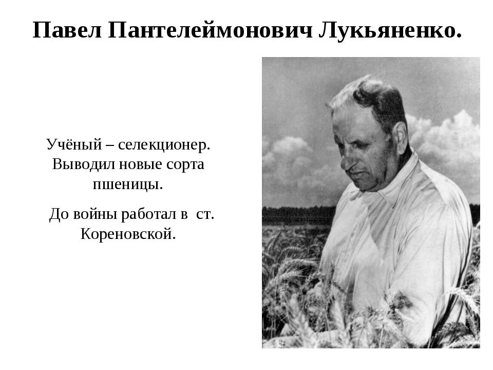 Павел Пантелеймонович Лукьяненко. Учёный – селекционер. Выводил новые сорта...