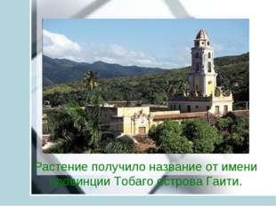 Растение получило название от имени провинции Тобаго острова Гаити.