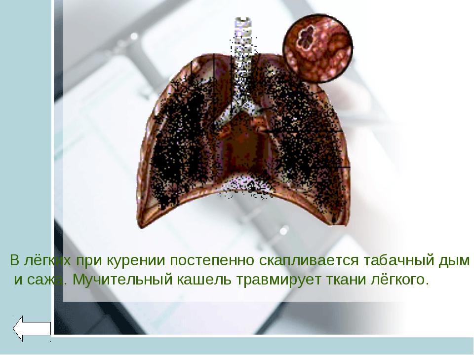 В лёгких при курении постепенно скапливается табачный дым и сажа. Мучительный...