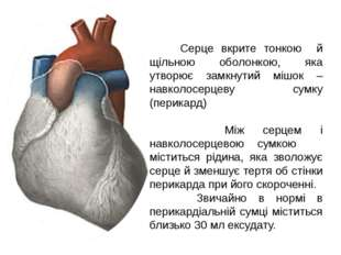 Серце вкрите тонкою й щільною оболонкою, яка утворює замкнутий мішок – навко