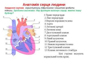 Анатомія серця людини 1 Праве передсердя 2 Ліве передсердя 3 Верхня порожнист