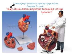 Демонстрація розбірного муляжу серця людини. Питання до учнів: Чому стінка лі