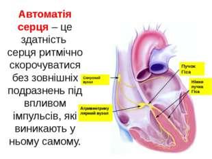 Автоматія серця – це здатність серця ритмічно скорочуватися без зовнішніх под