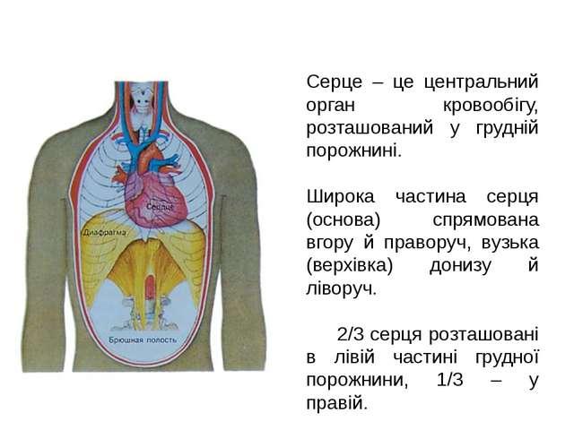 Серце – це центральний орган кровообігу, розташований у грудній порожнині. Ши...