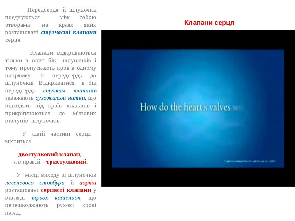 Клапани серця Передсердя й шлуночки поєднуються між собою отворами, на краях...