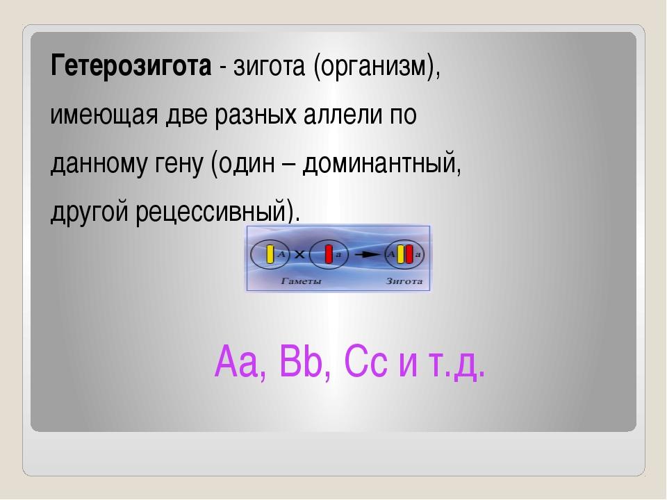 Гетерозигота - зигота (организм), имеющая две разных аллели по данному гену (...