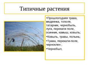 Типичные растения Прошлогодняя трава, медвянка, тополя, татарник, чернобыль,
