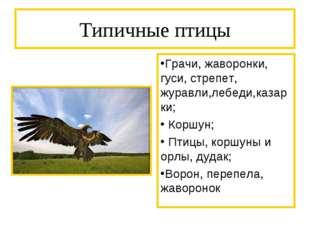 Типичные птицы Грачи, жаворонки, гуси, стрепет, журавли,лебеди,казарки; Коршу