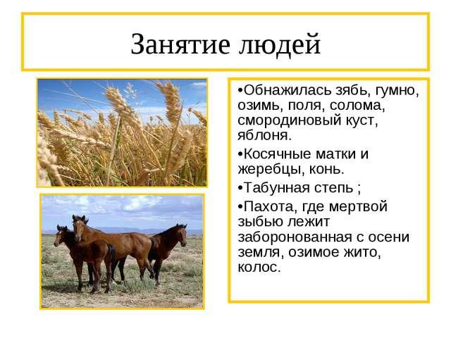 Занятие людей Обнажилась зябь, гумно, озимь, поля, солома, смородиновый куст,...