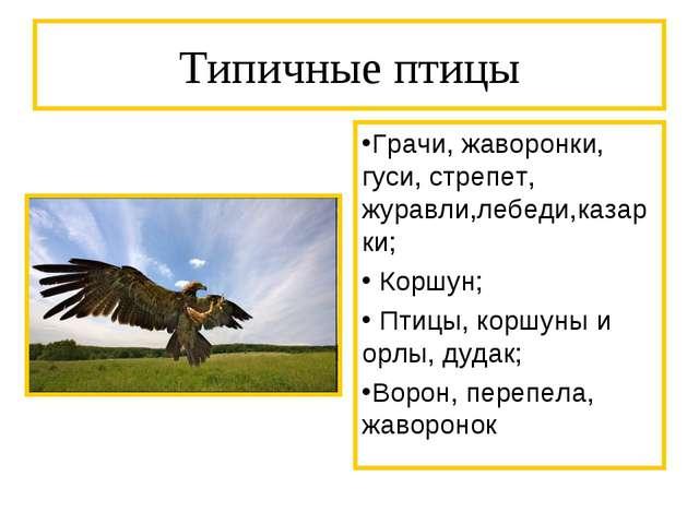 Типичные птицы Грачи, жаворонки, гуси, стрепет, журавли,лебеди,казарки; Коршу...
