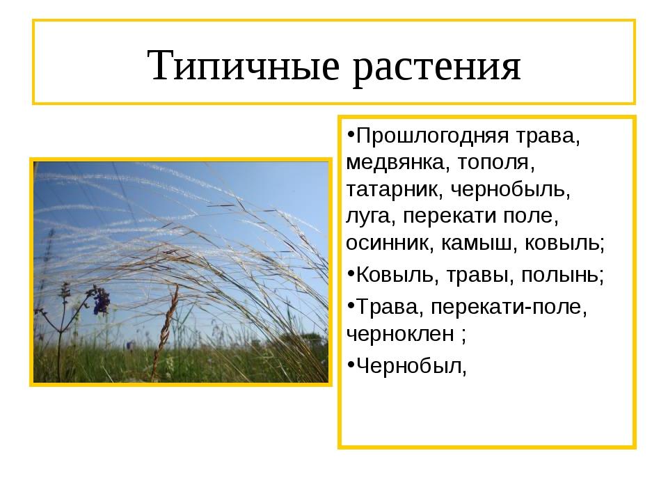 Типичные растения Прошлогодняя трава, медвянка, тополя, татарник, чернобыль,...