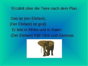 Erzählt über die Tiere nach dem Plan! Das ist (ein Elefant). (Der Elefant) is