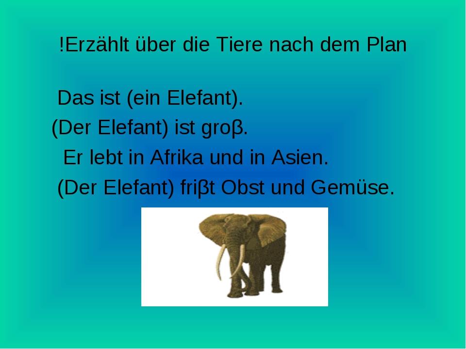 Erzählt über die Tiere nach dem Plan! Das ist (ein Elefant). (Der Elefant) is...